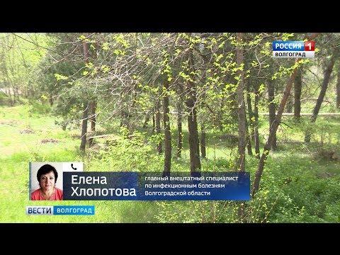В Волгоградской области зафиксирована первая смерть от укуса клеща