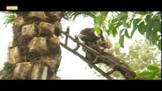 Smart Farm - Oil Palm Tree Farming