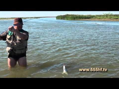 баку ловить рыбу