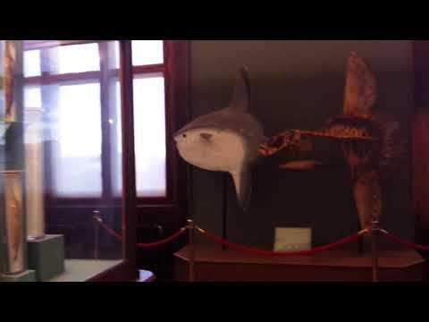 Легендарная выставка чучел животных (Рыбы Часть 1)