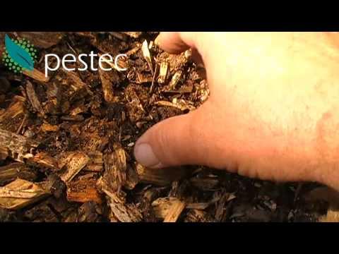 Termites Love To Eat Mulch Mulch Termite Food Youtube