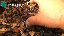 Termites love to eat mulch. mulch = termite food