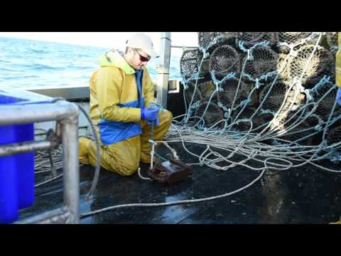 Fishing From Newlyn Final