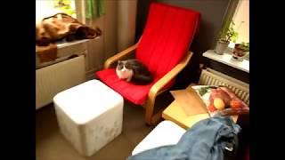 кошка гуляется. альтернатива контрасексу. проверено на 3 кошках в течении всей их жизни