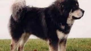 My Top 10 Best Dog Breeds Thumbnail
