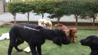 3か月になった兄妹犬ライラとサンディ、久々の対面でハイテンション!