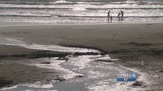 Sea star disease growing on Oregon Coast