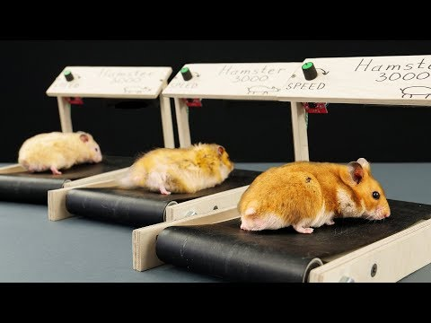 DIY Treadmill for Hamster