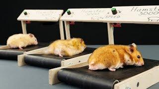 DIY Treadmill for Hamster