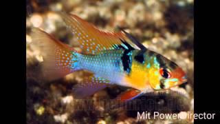 Die 10 schönsten Aquarium Fische | Der Aquaboss