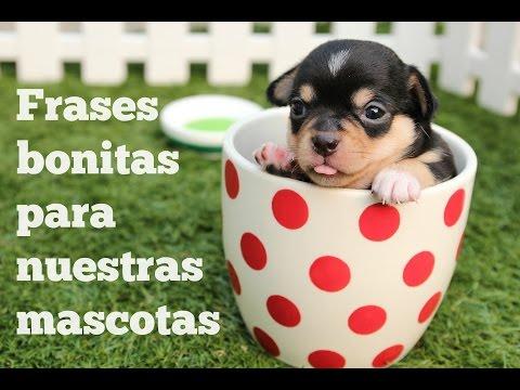 Frases Bonitas Para Nuestras Mascotas