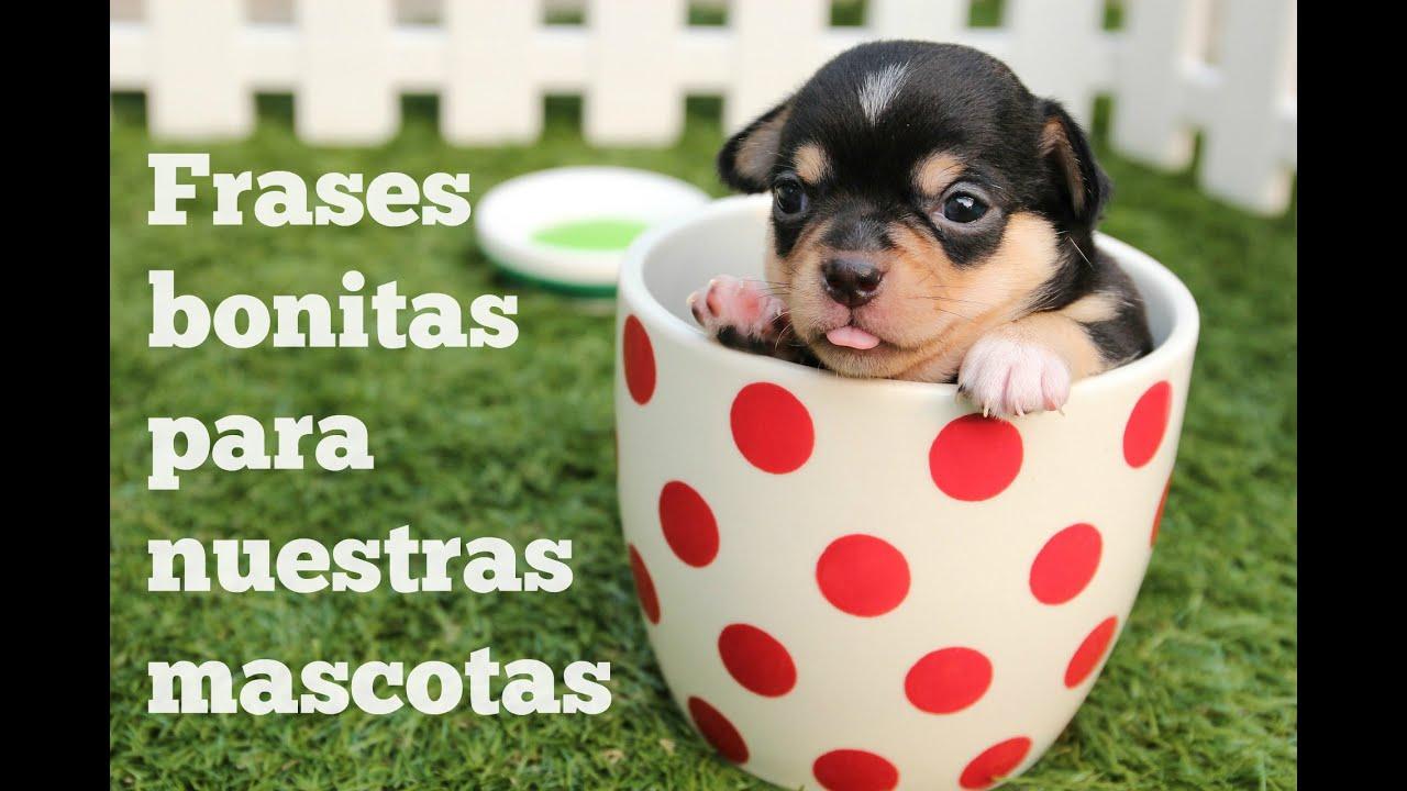 Frases Bonitas Para Nuestras Mascotas Youtube