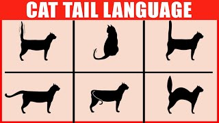 How to Read Your Cat's Tail Language