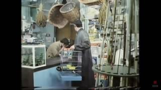 Watch Monty Python Pet Shop video
