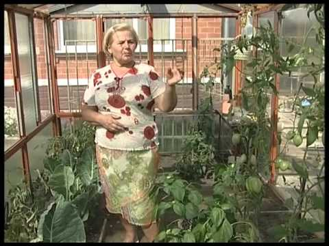 Совместимость овощей Совместимость овощных культур на