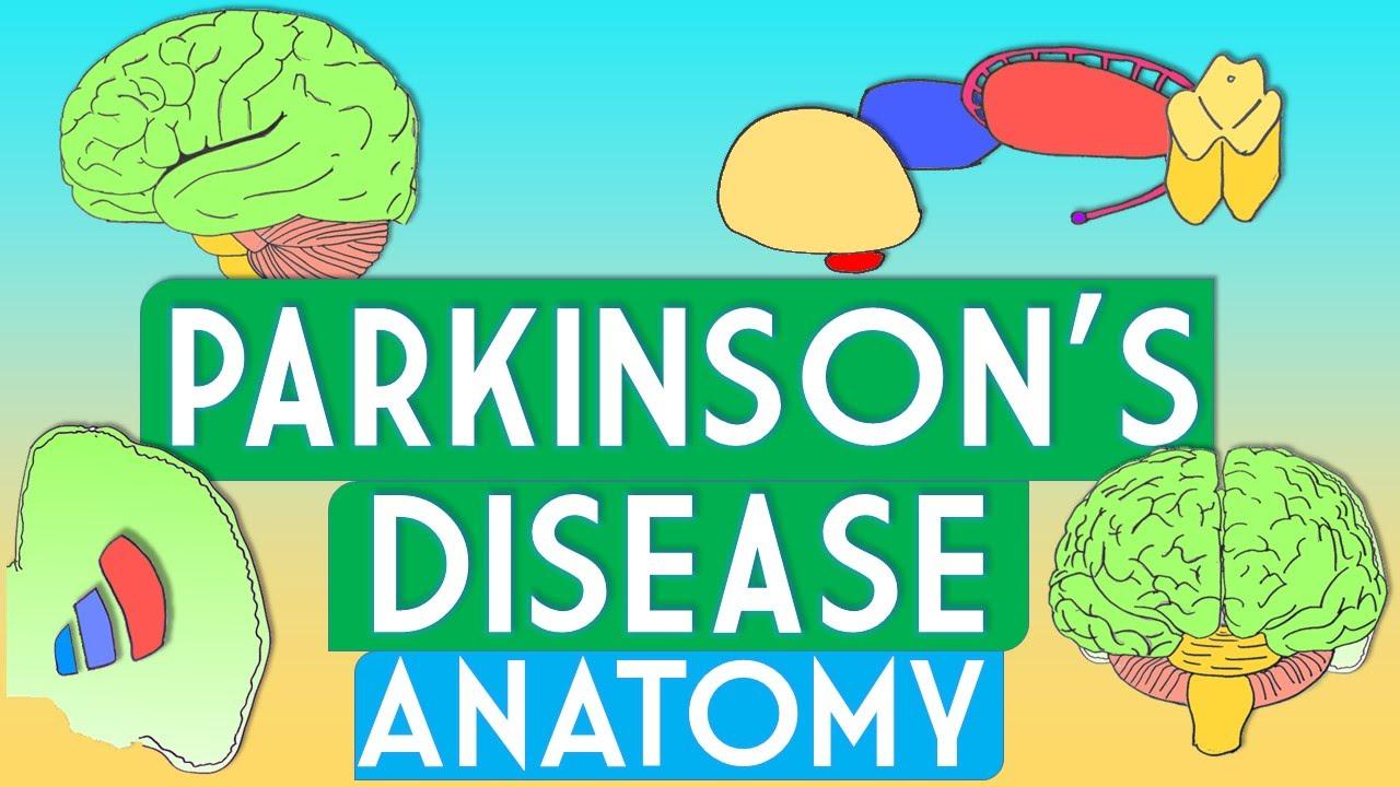 Parkinson\'s Disease Anatomy - YouTube