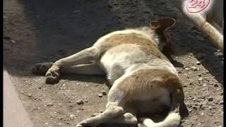 Смерть животных в ДТП: куда обратиться