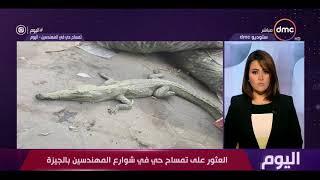اليوم - العثور على تمساح حي في شوارع المهندسين بالجيزة
