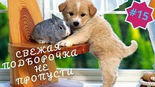 Приколы про животных Смешное видео про котов собак и не только Такого Вы еще не видели Выпуск 15
