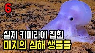 실제 카메라에 잡힌 미지의 심해 생물들 6가지