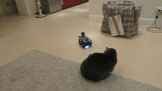 Робот танк гоняет котов