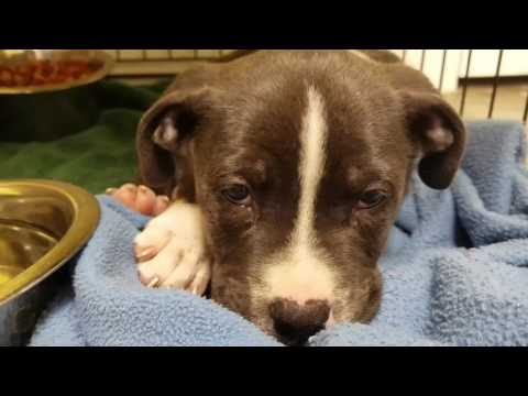 Puppies, kittens and more at Jackson County Animal Shelter in Gautier MS