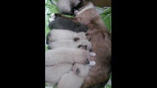 А у нас сегодня кошка родила вчера котят....