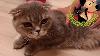 Ошейник от блох для кошек, случай осложнения