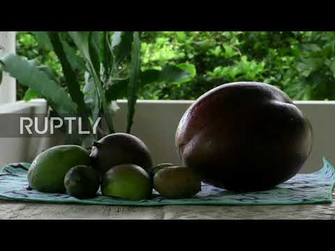 Magnificent MANGOS! 'World's largest' mango uncovered in Colombia
