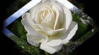 Wildflower - song by Skylark (lyrics)