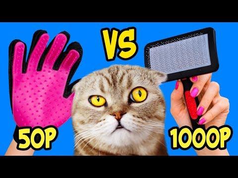 Вопрос: Зачем кошка перед дверью выкусывает шерсть и бросает на пол?
