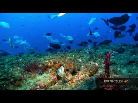 Nature's wonders: Coral reefs in HD