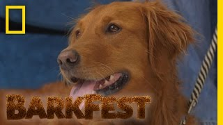 Top 5: Service Dogs | BarkFest