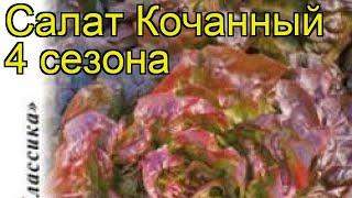 Салат кочанный 4 сезона. Краткий обзор, описание характеристик, где купить семена lactuca sativa