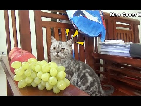 Cats Play With Apples And Green Grapes