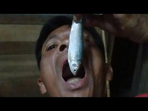 กินปลาสดๆแบบโหดๆ ก้อยปลาสร้อยแซ่บๆแบบ วิถีอีสาน