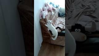 Кошка ведет себя странно