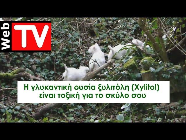 Η γλυκαντική ουσία ξυλιτόλη (Xylitol) μπορεί να σκοτώσει το σκύλο σας
