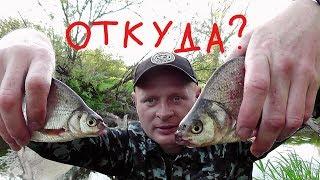 видео Рыболовная насадка ручейник