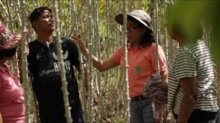 Management of Cassava Phytoplasma Disease: Survey, Diagnosis, Characterization & Control