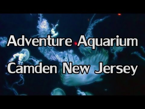 ♥ DavetheUsher and Tyrie at the Adventure Aquarium in Camden New Jersey - October 2012