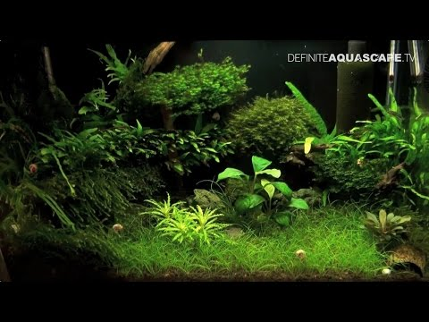 6th Silesian Aquarium Weekend 2014 (pt.6) - Aquariums of Aqu