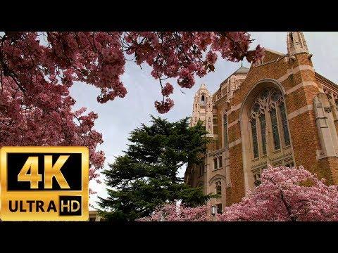 Blooming Spring Flowers at University of Washington 20170416 4K UHD