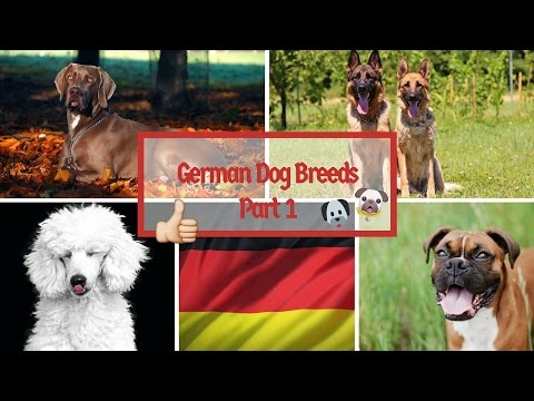 German Dog Breeds Part 1