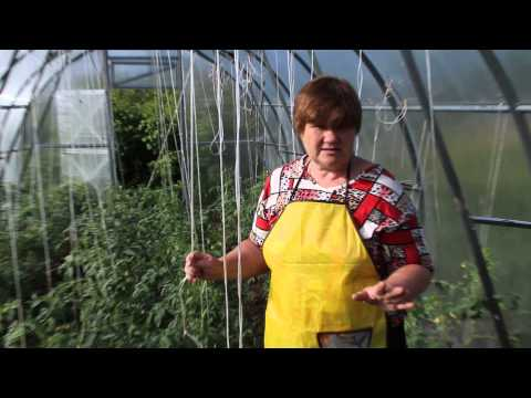Применяем борную кислоту в саду и огороде