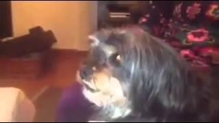 كلب ريالي يغضب لدى سماعه أسماء لاعبي البارسا