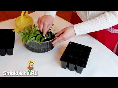 Гантель из конфет своими руками: как это делается легко и просто