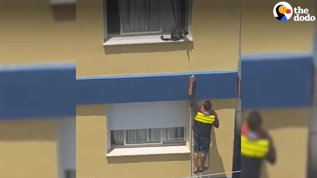 Delivery Guy Stops To Save A Cat Stuck On A Ledge