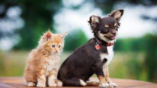 СМЕШНЫЕ КОТЫ Смешные кошки Шутки с котами - Свежие приколы (2019) МатроскинТВ