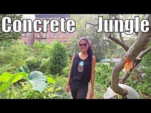 Manhattan's Secret Gardens - New York City's Hidden Gem ?